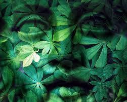 Green light budda